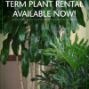 rent plants for your office, event or holiday from Waukehsa Floral & Planteriors